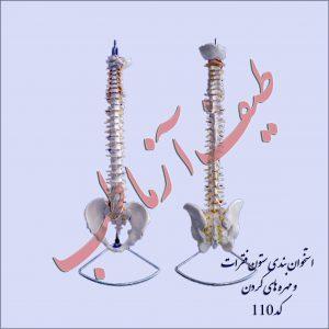 استخوان ستون فقرات