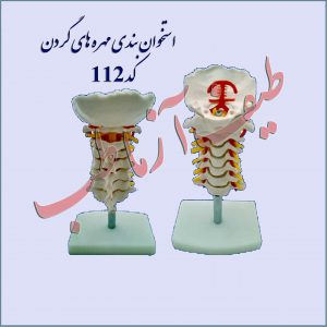 استخوان مهره گردن